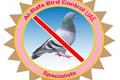 Al Rafe Bird Control UAE